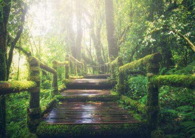 Chemin en bois en pleine forêt tropicale